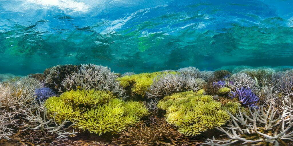 """A scene from the documentary """"Chasing Coral.""""Credit...Richard Vevers/Netflix"""